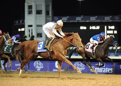 Drosselmeyer Wins Breeders' Cup Classic