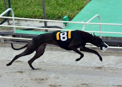 Greyhound Form