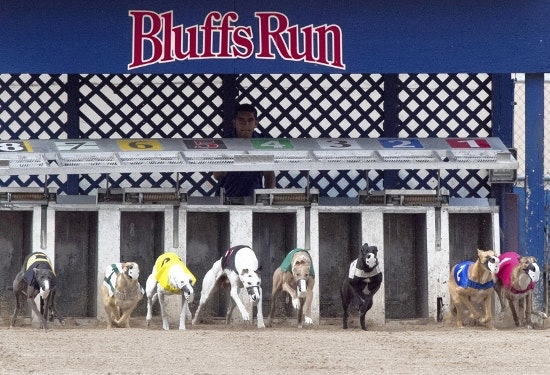 Bluff Runs Greyhound Handicap Track