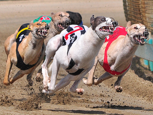 Dog racing betting rules for holdem sports betting florida legal