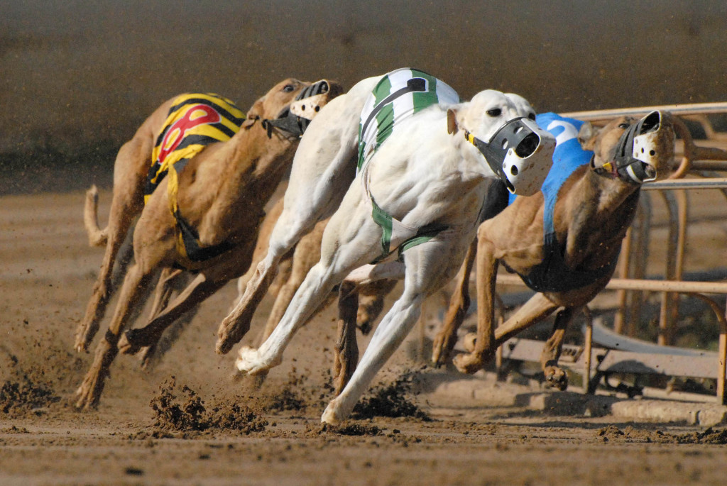 dog track betting online
