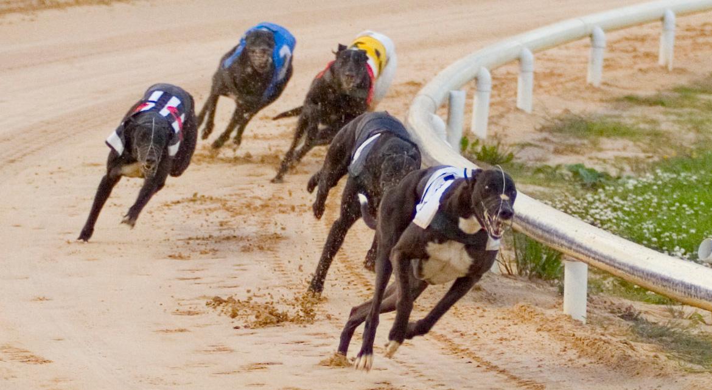 irish greyhound derby 2021 betting lines