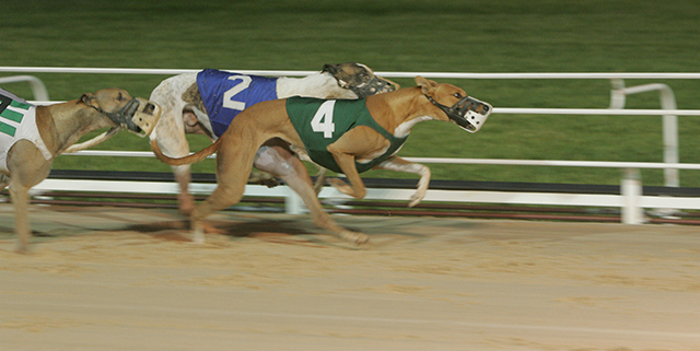 Bet greyhound racing on BetAmerica