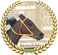 King Guillermo - 2020 Kentucky Derby Contender