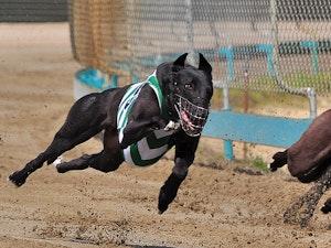 Southland-Grehound-Dog-1