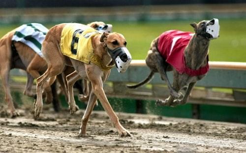 greyhound (1) (500x311)