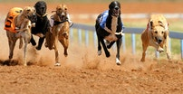 gh racing dogs