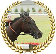 Dean Martini - 2020 Kentucky Derby Contender