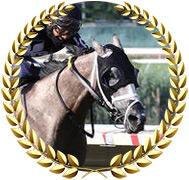 Ny Traffic - 2020 Kentucky Derby Contender