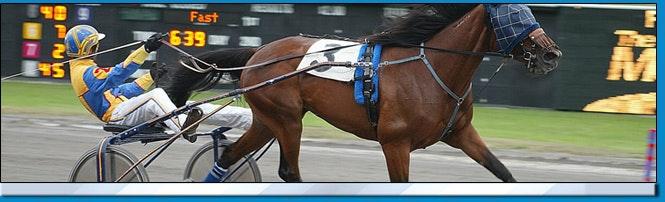 The Meadows Harness Racing