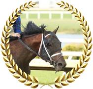 Shared Sense - 2020 Kentucky Derby Contender