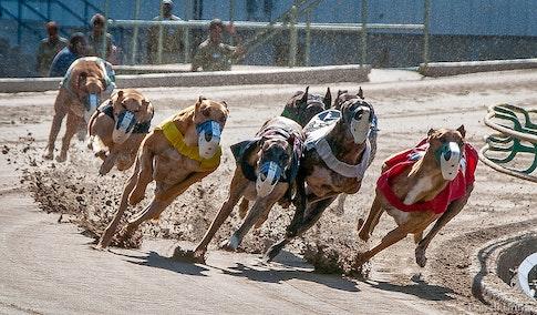 Greyhounds-3526-2