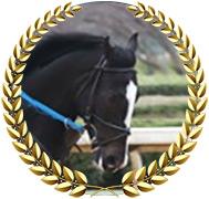 Long Range Toddy - 2019 Kentucky Derby Hopeful
