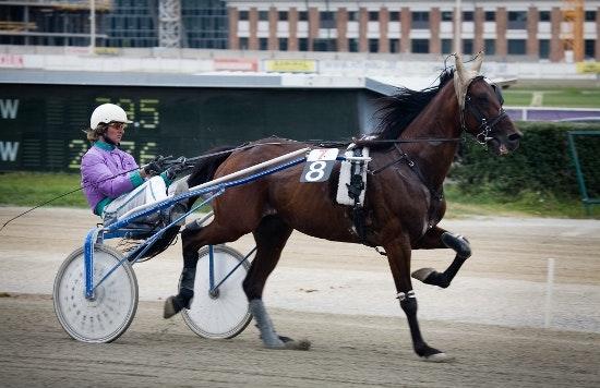 Trotting Racer Harness