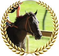 Major Fed - 2020 Kentucky Derby Contender