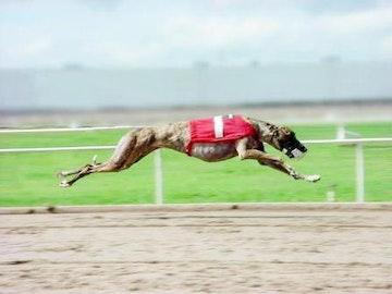 Southland Park Greyhound Racing