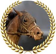 Max Player - 2020 Kentucky Derby Contender