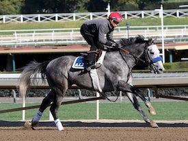 American Theorem (Horsephotos.com/Cecilia Gustavsson)